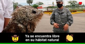 Rescatan pájaro estaca que se encontraba herido en la vía Villavicencio - Puerto López