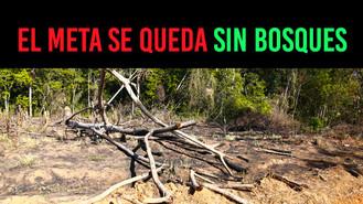 El Meta, entre los más afectados por la deforestación