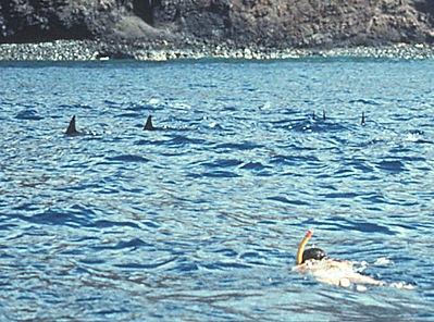 Snorkeler-Dolph.jpg