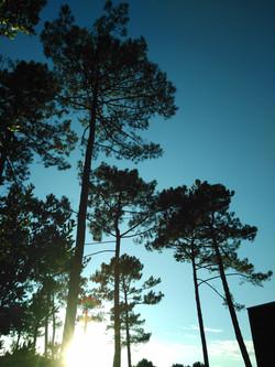 La tête dans les pins