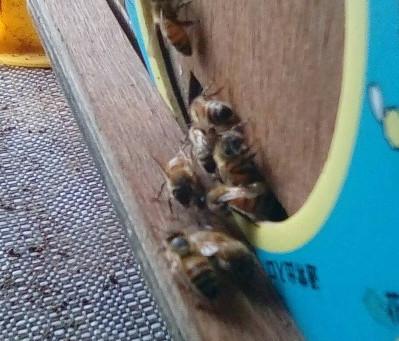 オツベルとミツバチ