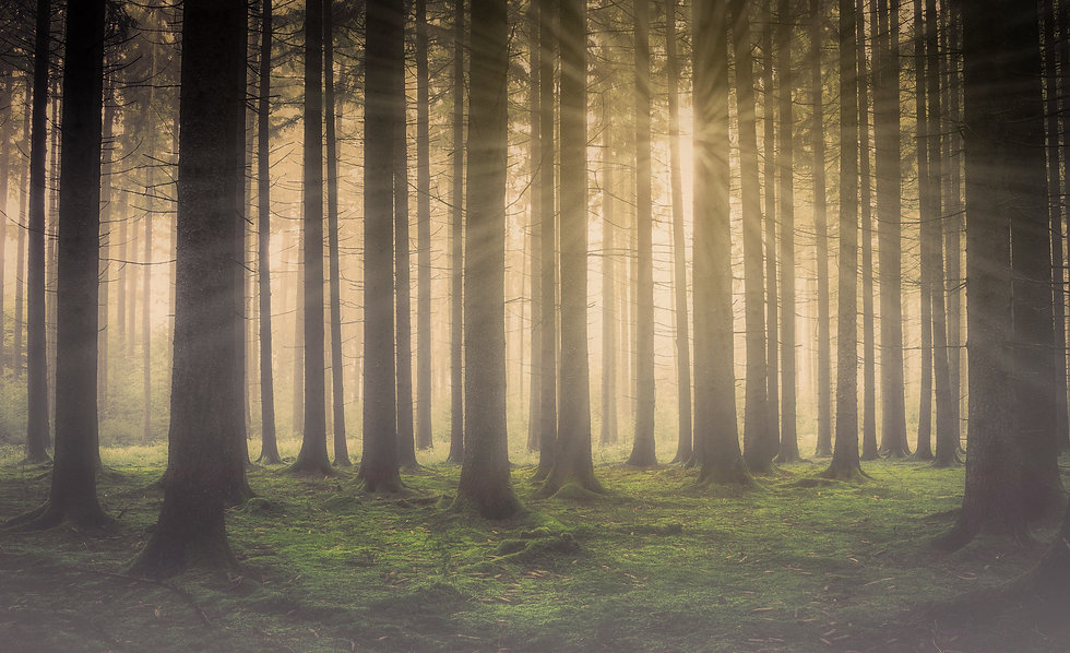Acupuncture in Berwick - Misty forest scene