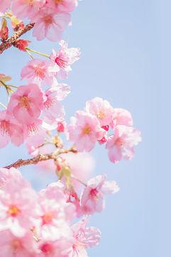 blossom.001.jpeg