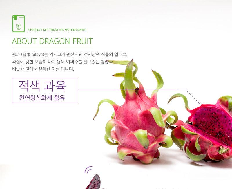용과레드칩소개3