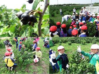 青森市内小学生が収穫体験!