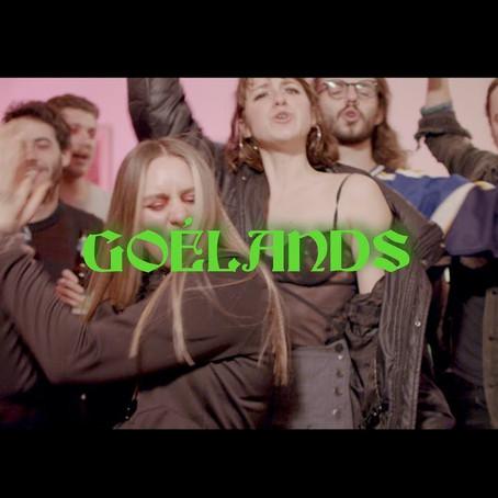 Goélands de Marie-Gold