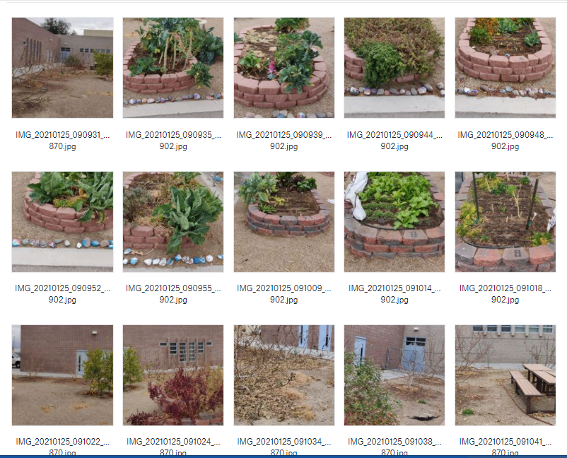 Various photos from the garden.PNG