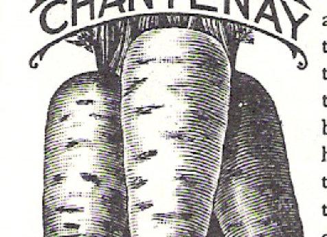 Chantenay Red-Cored Carrot