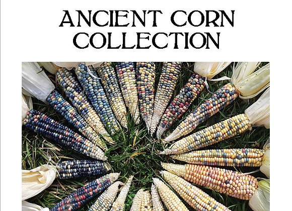 Ancient Corn Collection