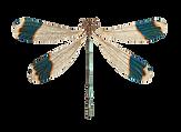 libellules2.png