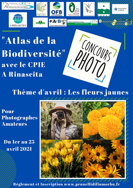 affiche concours photo.png