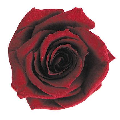 INNROBB-15-10 Baby Rose
