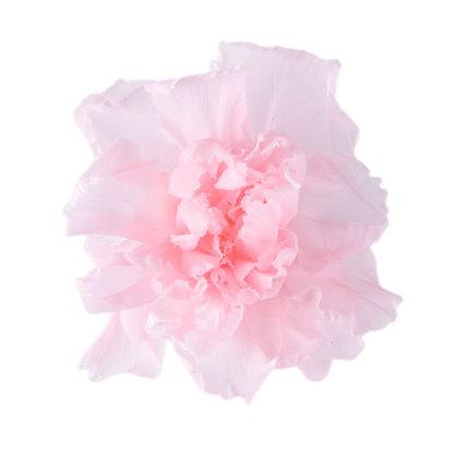 INNCVSM-15-30 Mini Carnation