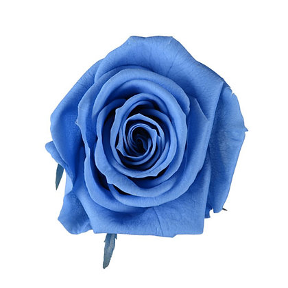 BOX OF 6 BLOOMS ROSTC-6-32 Princess Blue