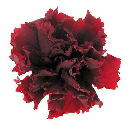 INNCVSM-15-10 Mini Carnation