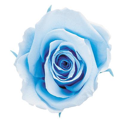 FL0350-13 Duet Rose Mediana