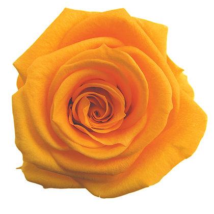#17 Golden Yellow