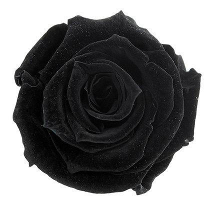 INNROBB-15-26 Baby Rose