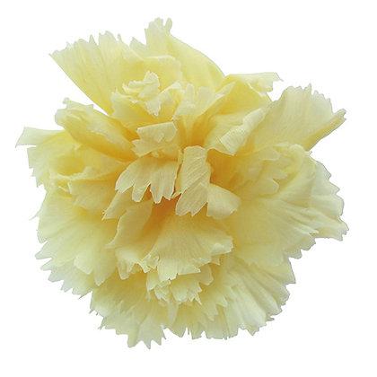 INNCVSM-15-15 Mini Carnation