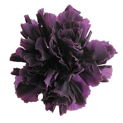 INN-CVST-6-18 Violet - Carnation Standard