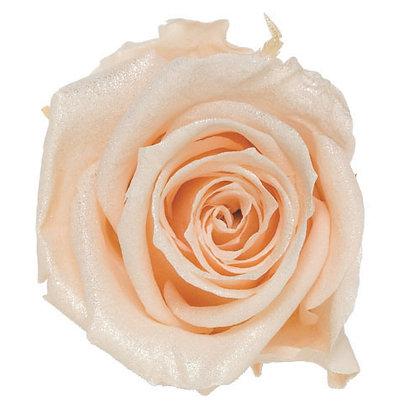 FL0106-04 Sparkling Standard Rose