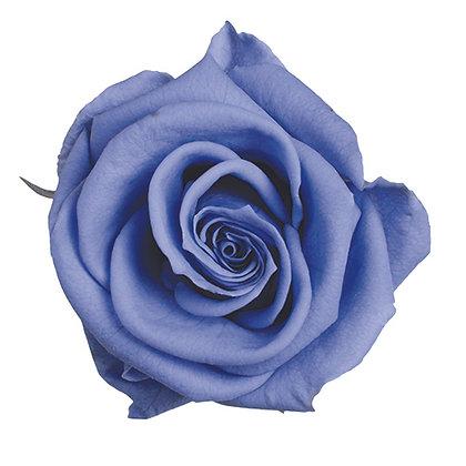 BOX OF 6 BLOOMS ROSTC-6-60 Lavender Blue