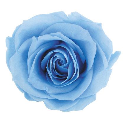 #13 Powder Blue