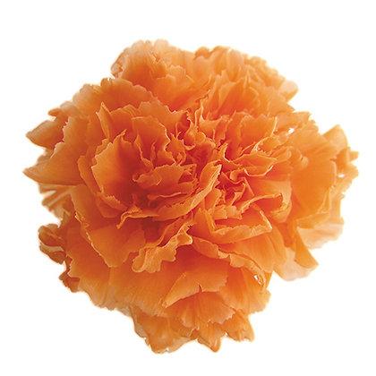 INN-CVST-6-6 Sunset Orange - Carnation Standard