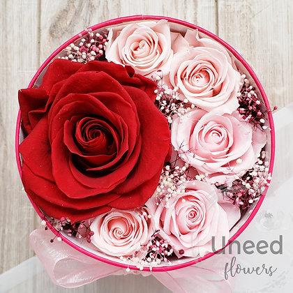 UN-0180 Antheia - Wine Milky Pink