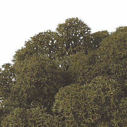 FL820-78 Nordic Moss 50g