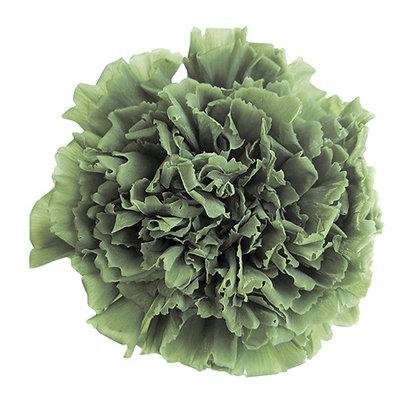 INN-CVST-6-25 Green Tea - Carnation Standard