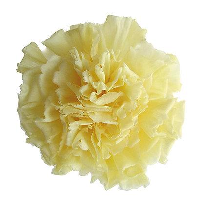 INN-CVST-6-15 Light Yellow - Carnation Standard