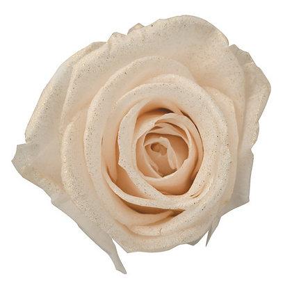 FL0107-46 Sparkling Gold Standard Rose