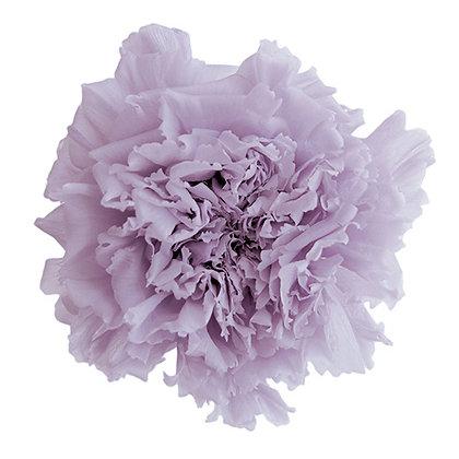 INN-CVST-6-43 Soft Lilac - Carnation Standard