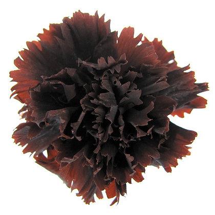 INNCVSM-15-19 Mini Carnation
