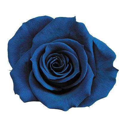 ROSP-8-59 Majolica Blue