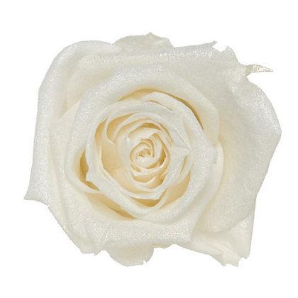 FL0106-01 Sparkling Standard Rose