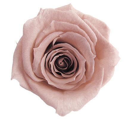 INNROBB-15-55 Baby Rose