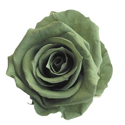FL0300-25 Mediana Rose