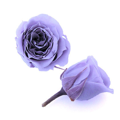 FL041-43 Piccola Blossom Rose