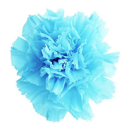INN-CVST-6-13 Powder Blue - Carnation Standard