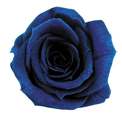 INNROBB-15-59 Baby Rose