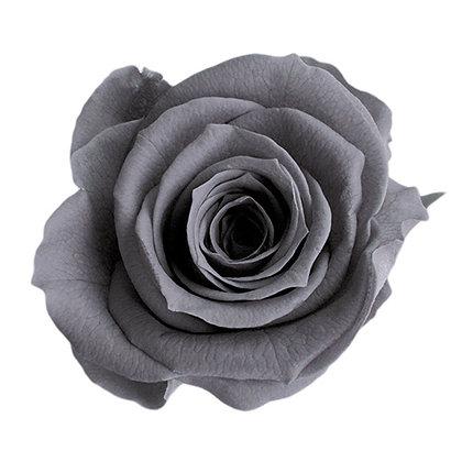 FL0300-68 Mediana Rose