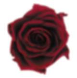 FL090-10.jpg
