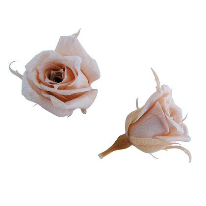 FL060-55 Micro Rose