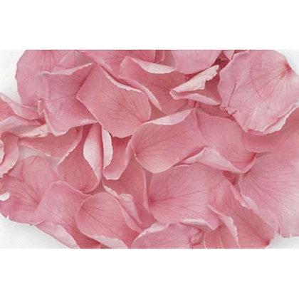 FL019-20 Rose Petals
