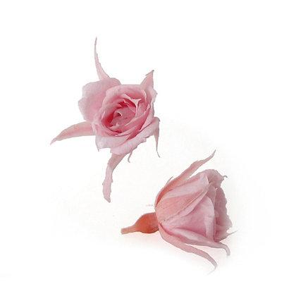 FL060-07 Micro Rose