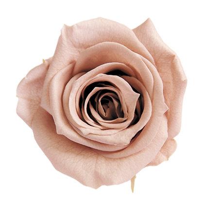 FL034-55 Mediana Short Rose