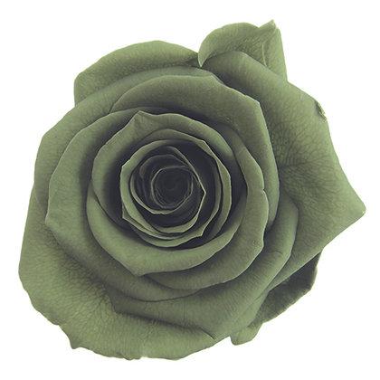 SINGLE BLOOM ROSTC-6-25 Green Tea