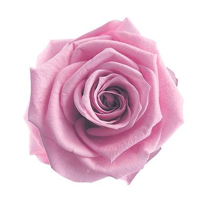 #61 Lavender Pink